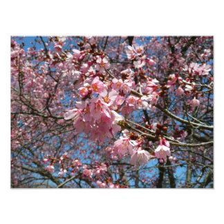 Cherry Blossoms and Bee Pink Spring Floral Photo Print
