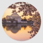 Cherry Blossoms And The Jefferson Memorial Round Sticker