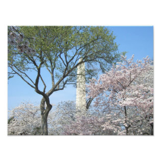 Cherry Blossoms and the Washington Monument in DC Photographic Print