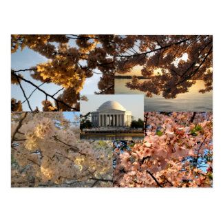 Cherry Blossoms at DC's Tidal Basin Postcard