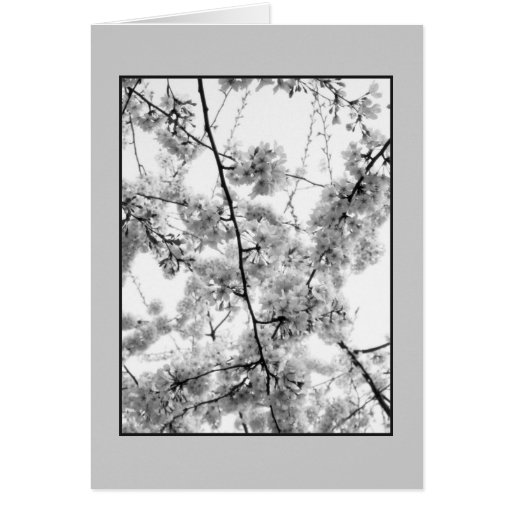 'Cherry Blossoms' B&W Blank Greeting Card