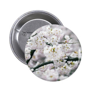 Cherry Blossoms Pinback Buttons