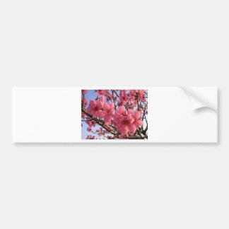 Cherry Blossoms Bumper Stickers