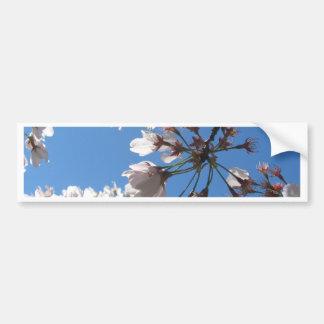 Cherry Blossoms * Close Up Bumper Sticker
