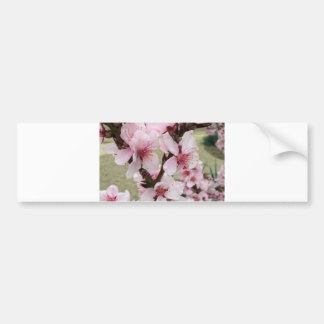Cherry Blossoms Clusters The Spring Bumper Stickers