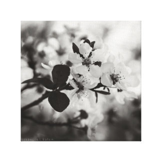 Cherry Blossoms in Black & White Canvas Print