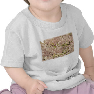 Cherry Blossoms in Spring Tee Shirts