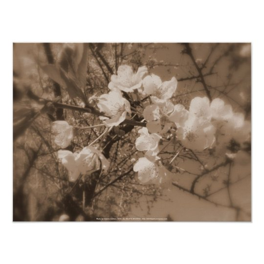 cherry blossoms in the sky, sepia poster