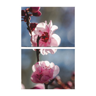 Cherry Blossoms in the Sunshine Triptych Art Canvas Print