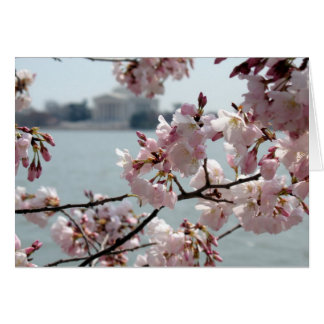 Cherry Blossoms in Washington DC Cards