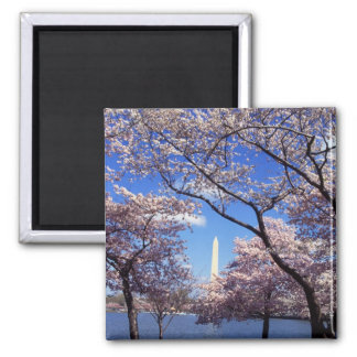 Cherry Blossoms in Washington DC fridge magnet