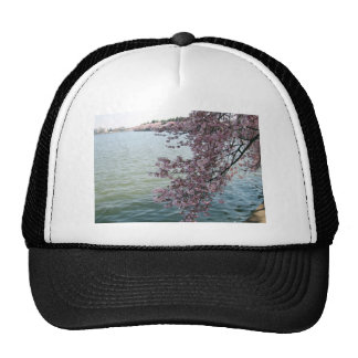 Cherry Blossoms in Washington DC Hats