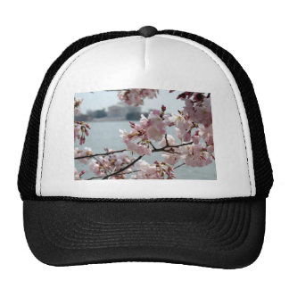 Cherry Blossoms in Washington DC Mesh Hat