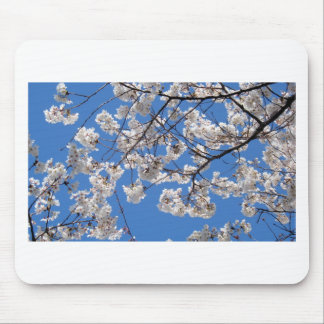 Cherry Blossoms in Washington DC Mouse Pad