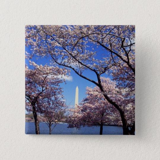 Cherry Blossoms in Washington DC pinback button