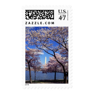Cherry Blossoms in Washington DC Postage Stamps