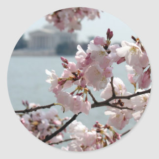 Cherry Blossoms in Washington DC Round Stickers