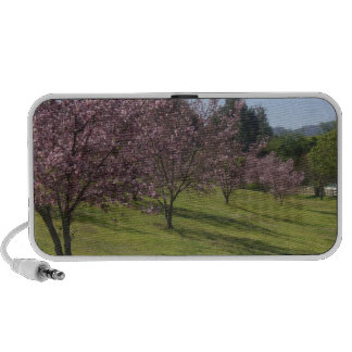 Cherry Blossoms iPod Speakers