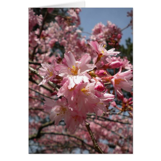 Cherry blossoms note card