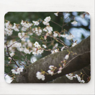 Cherry Blossoms on Trunk Mouse Pad
