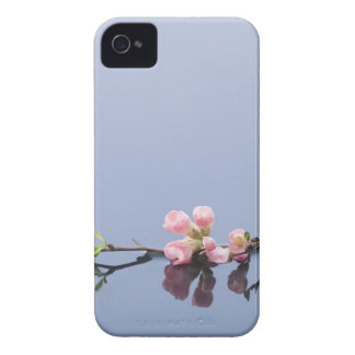 Cherry blossoms on water iPhone 4 cover