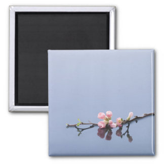 Cherry blossoms on water magnet