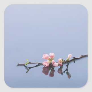 Cherry blossoms on water square sticker