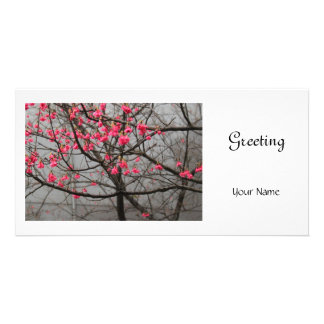 Cherry Blossoms Photo Card