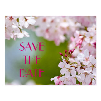 cherry_blossoms, SAVE THE DATE Postcard
