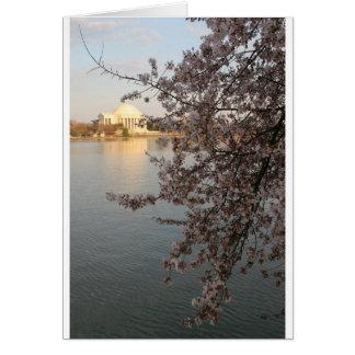 Cherry Blossoms Washington DC Card