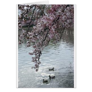 Cherry Blossoms Washington DC Greeting Cards