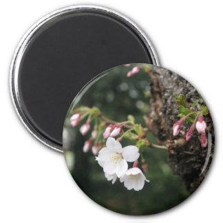 Cherry Blossoms Washington DC Fridge Magnets
