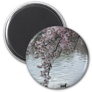 Cherry Blossoms Washington DC Magnets