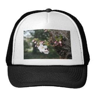 Cherry Blossoms Washington DC Mesh Hats
