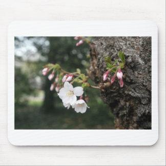 Cherry Blossoms Washington DC Mouse Mats