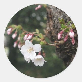Cherry Blossoms Washington DC Round Sticker