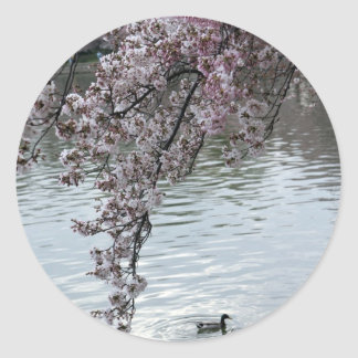 Cherry Blossoms Washington DC Sticker