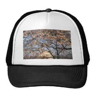 Cherry Blossoms Washington DC Trucker Hat