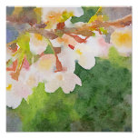 Cherry Blossoms Watercolor Sakura Flowers Spring