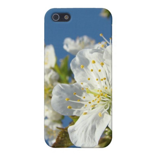 Cherry Blossoms White iPhone cases Spring Blue Sky Cover For iPhone 5