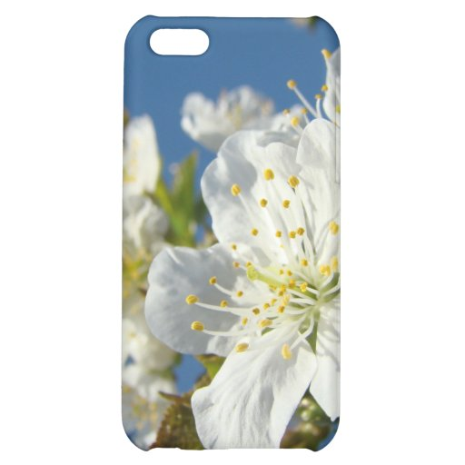 Cherry Blossoms White iPhone cases Spring Blue Sky iPhone 5C Cases