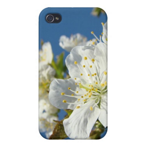 Cherry Blossoms White iPhone cases Spring Blue Sky iPhone 4 Cases