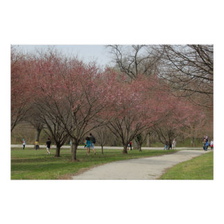 Cherry Blossoms with People Print