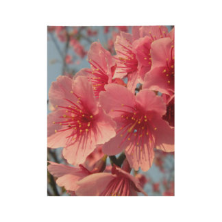 Cherry Blossoms Wood Poster