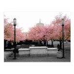 Cherry Capitol Postcard
