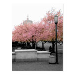 Cherry Capitol Postcards