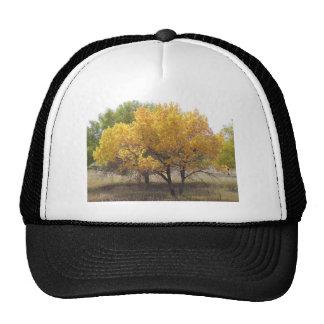 Cherry Creek State Park Colorado Trees Cap