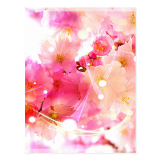 Cherry Flower Postcard