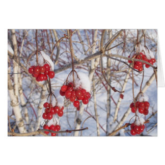 Cherry Snow Cones Card
