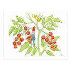 Cherry Tomato Gnome postcard